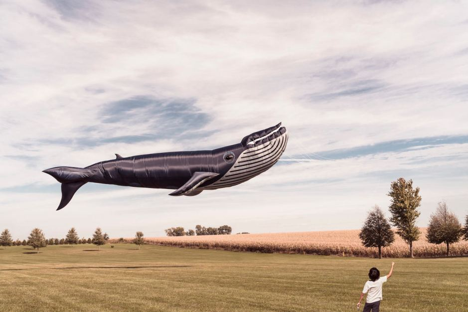 enfant avec ballon baleine